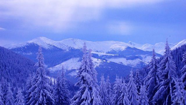 Верхушки деревьев под снегом