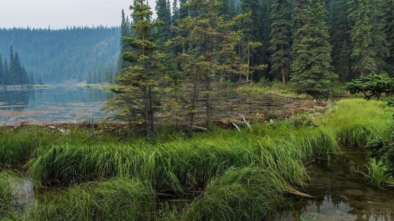 Зеленый лес и высокая трава на озере