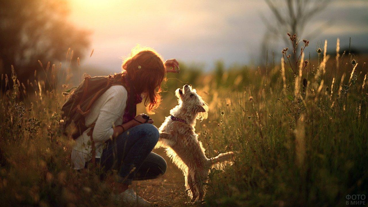 Девушка играет с маленькой собакой в поле на закате