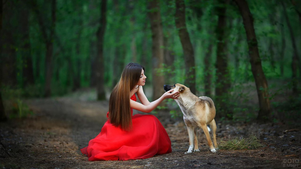 Девушка в красном платье с собакой в зелёном лесу