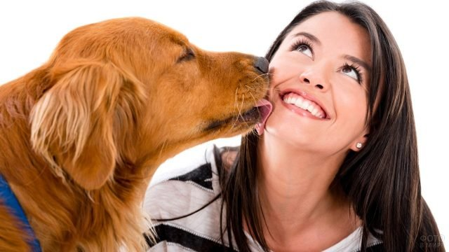 Рыжая собака лижет в лицо брюнетку