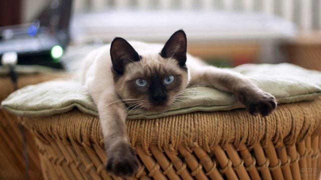 Котик разлёгся на пуфе