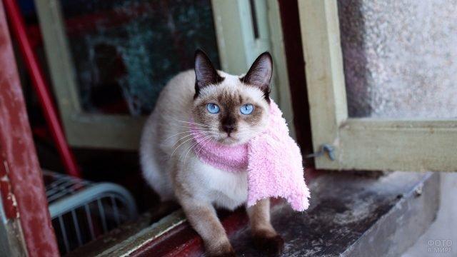 Симпатичный сиамский кот в розовом шарфе