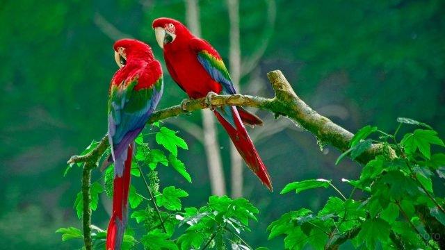 Цветные попугаи какаду сидящие на ветке