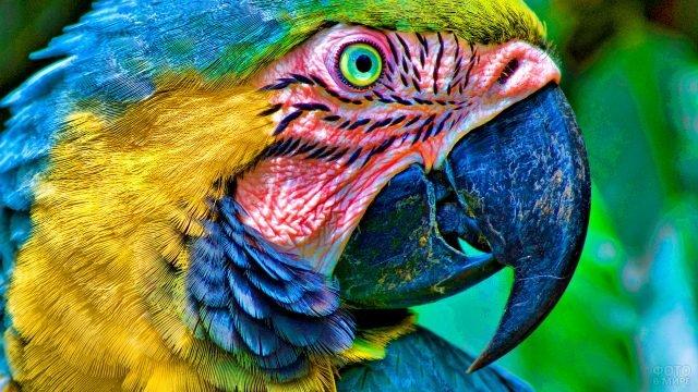 Голова попугая ара крупным планом
