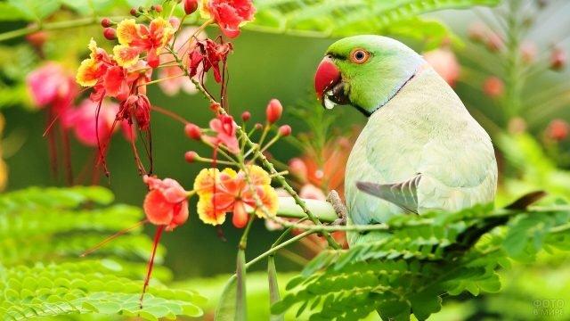 Ожереловый зеленый попугай сидит в цветах