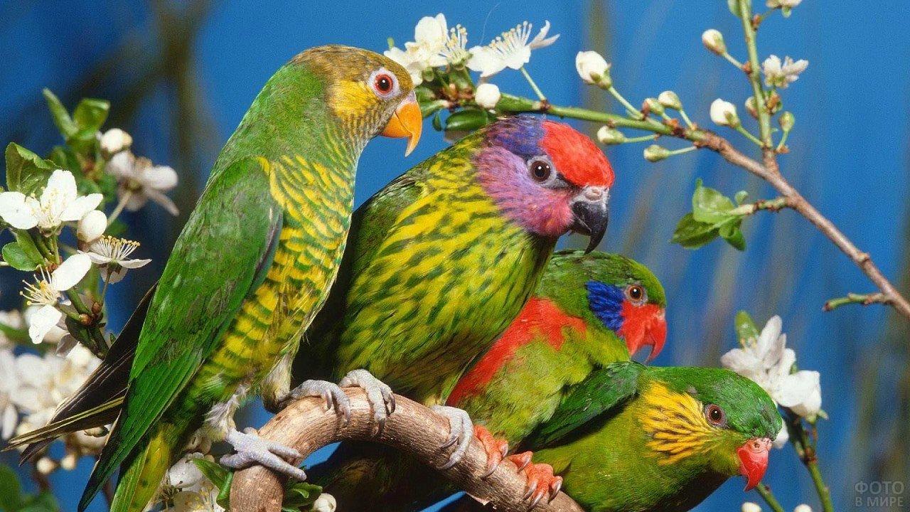 Разноцветные попугаи сидят на ветке