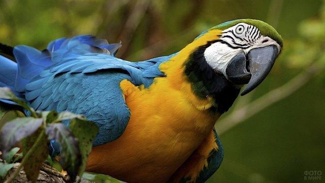Жёлто-синий попугай ара сидит на ветке
