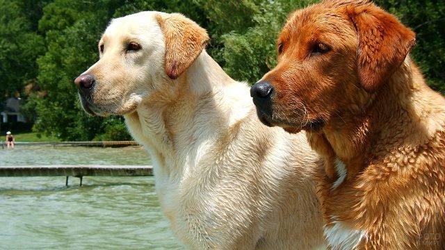 Два пса греются на солнышке после водных процедур