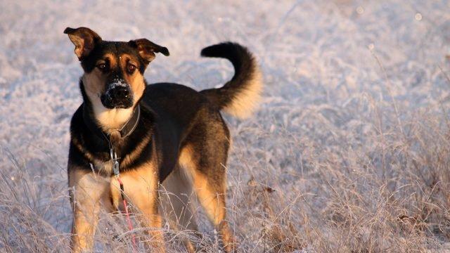 Пёс позирут на природе