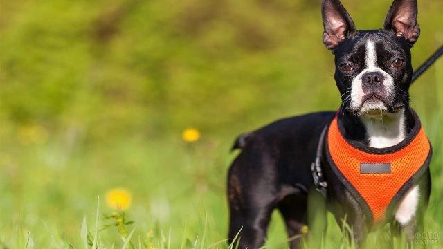 Собака на природе куда-то пристально смотрит