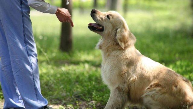 Собака внимательно слушает своего хозяина