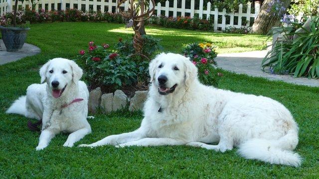 Собаки отдыхают на травке