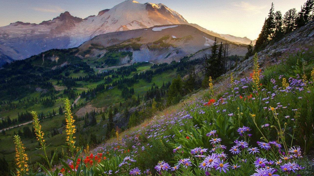 Цветочные луга у подножья гор