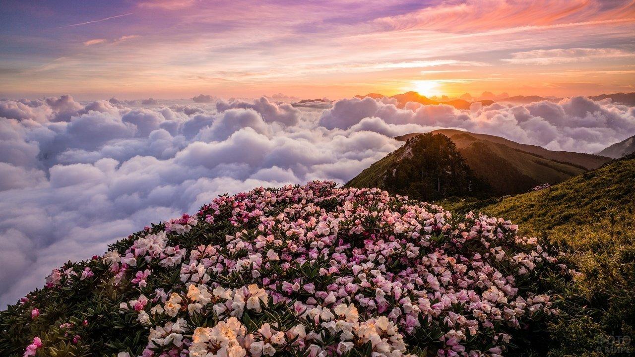 Цветы в горах на восходе солнца