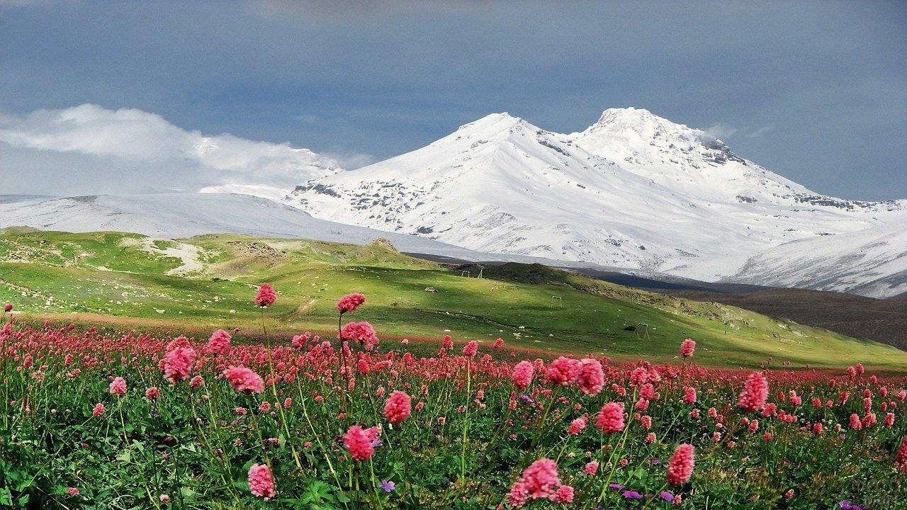 Эльбрус в розовых цветах