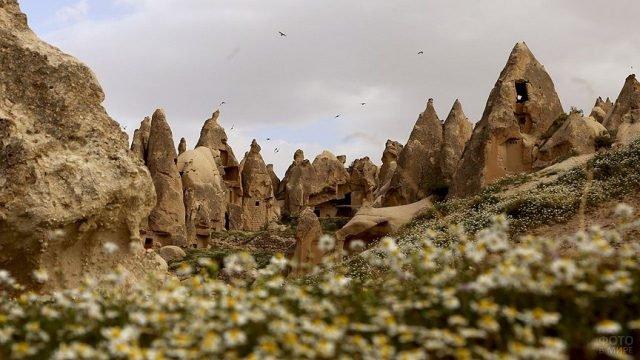 Цветение ромашек на фоне скал в Каппадокии
