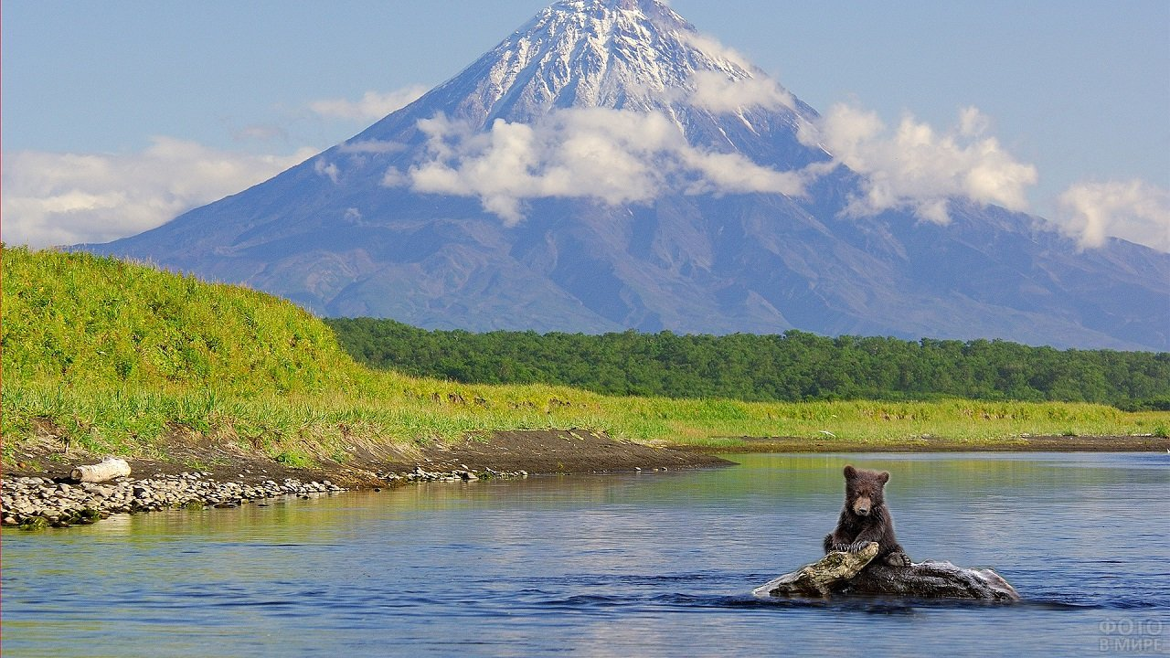 Медведь сидит на камне посреди реки