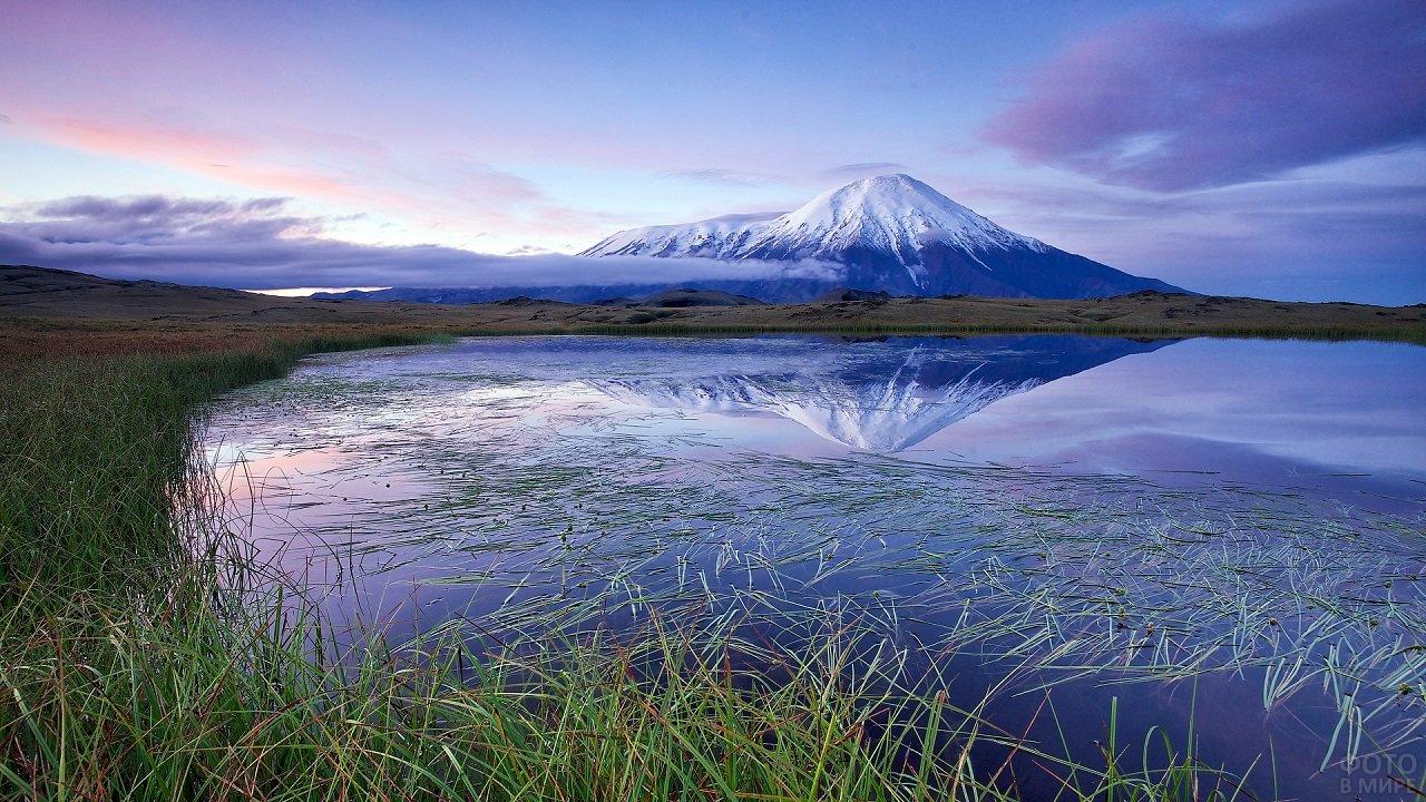 Заснеженная гора отражается в озере с камышами