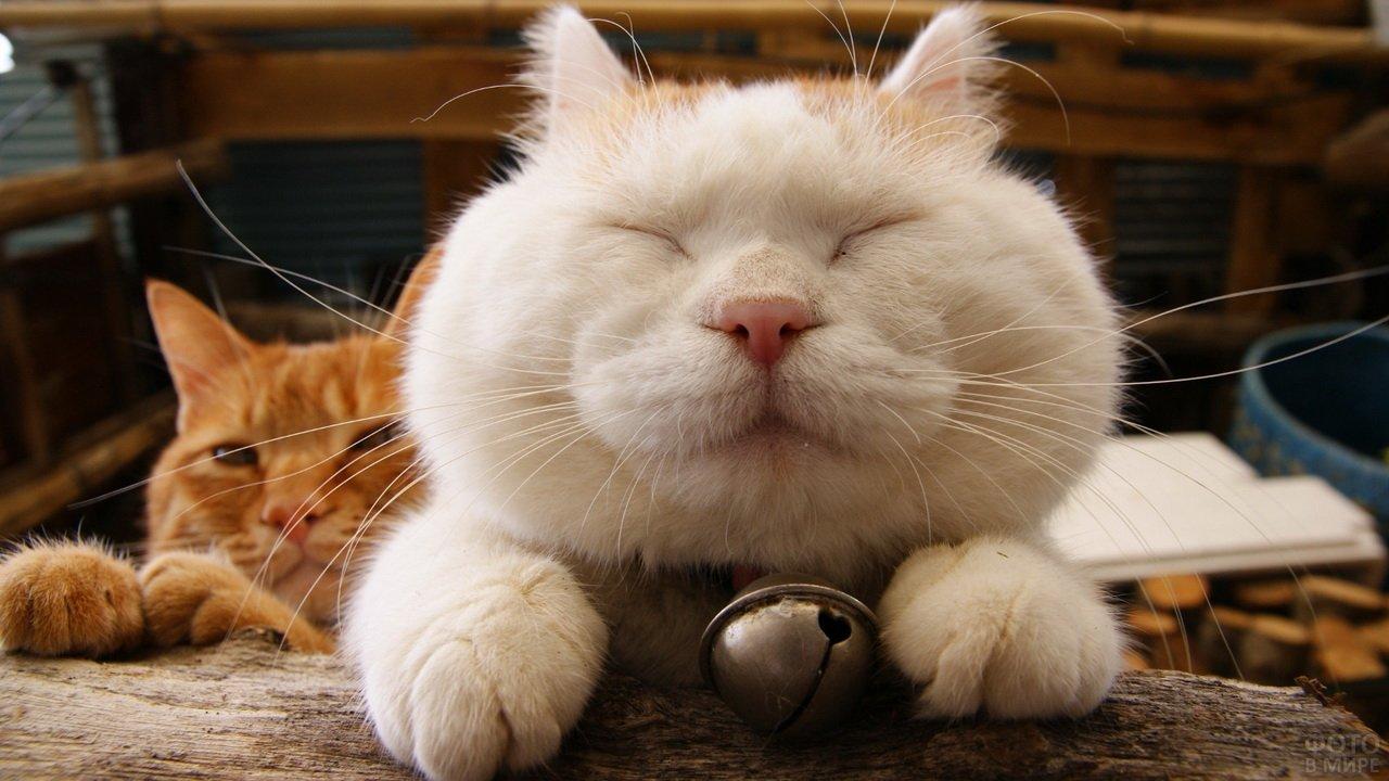 Довольные кошачьи морды