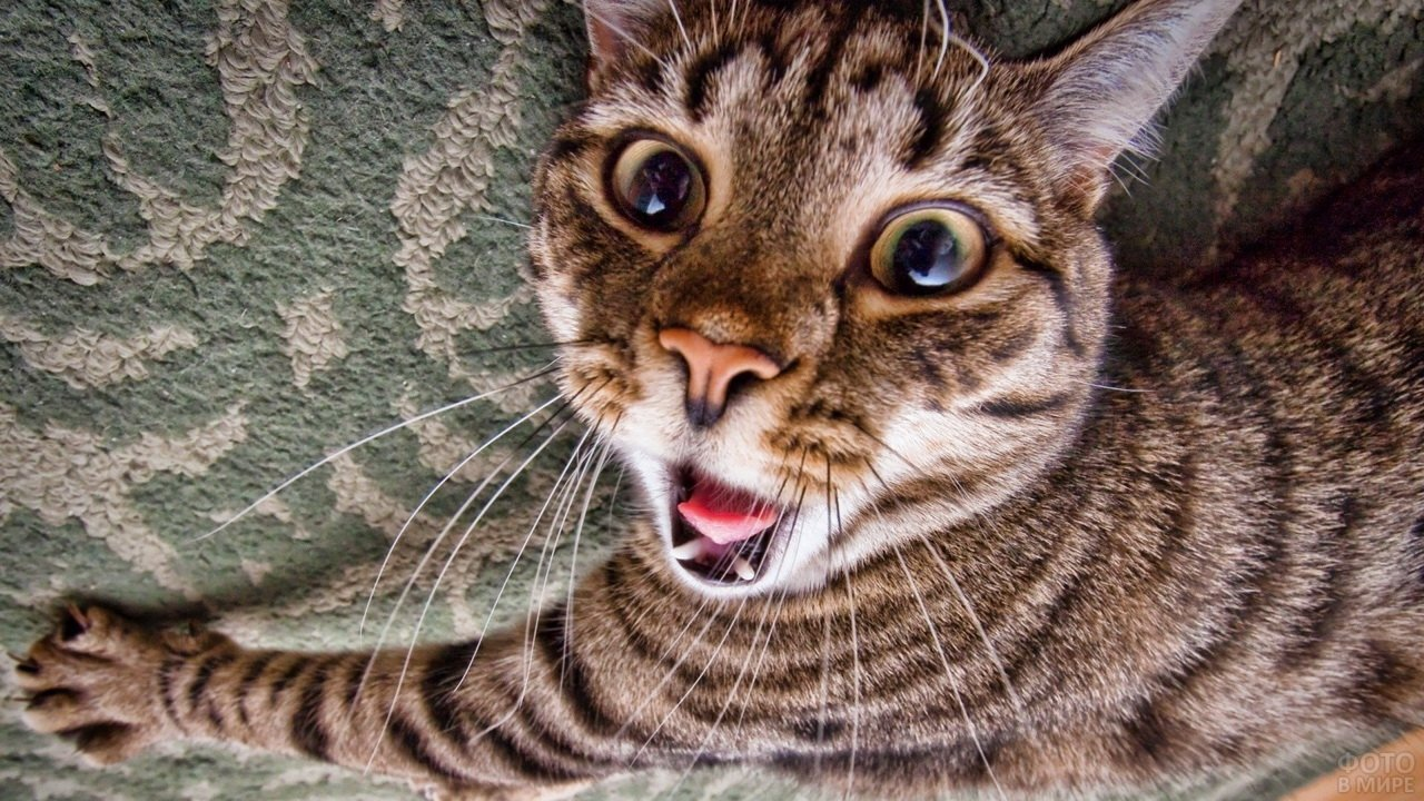 Дурацкий кошачий взгляд