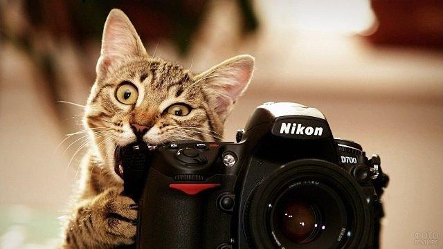 Киса грызёт фотоаппарат хозяина