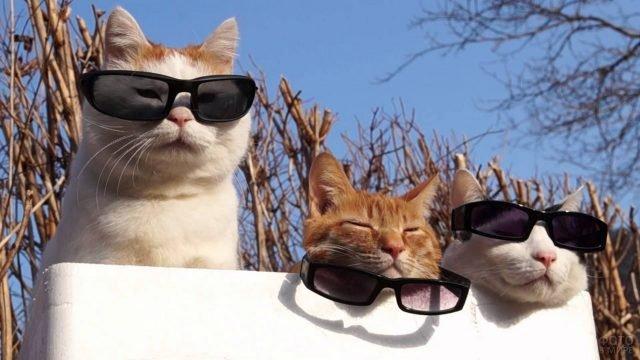 Кошачья банда в чёрных очках