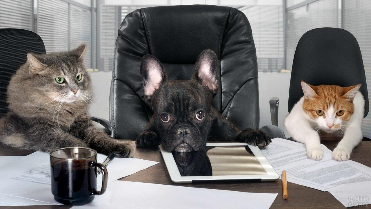 Кошачье совещание за круглым столом