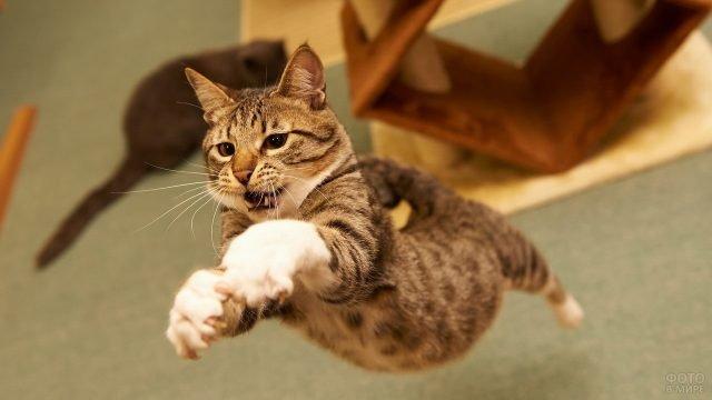 Кошачий полёт рыжика