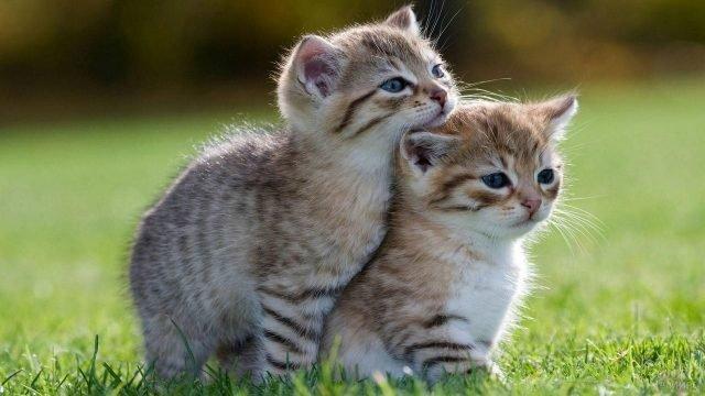 Кошачья дружба с пелёнок