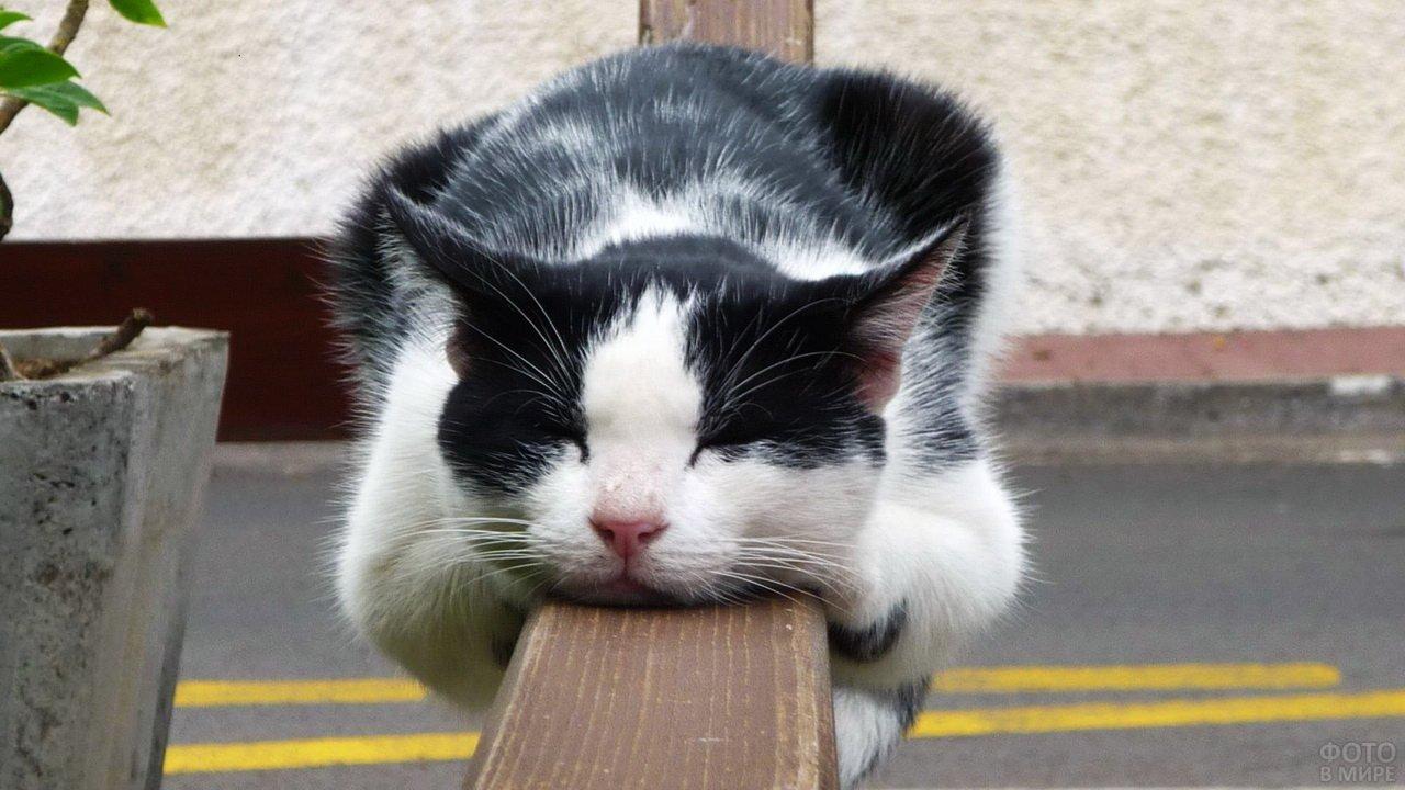 Кошка спит на перилах