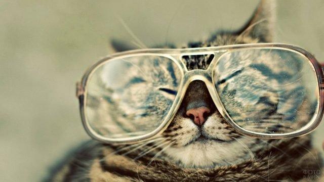 Кот-японец в очках для зрения