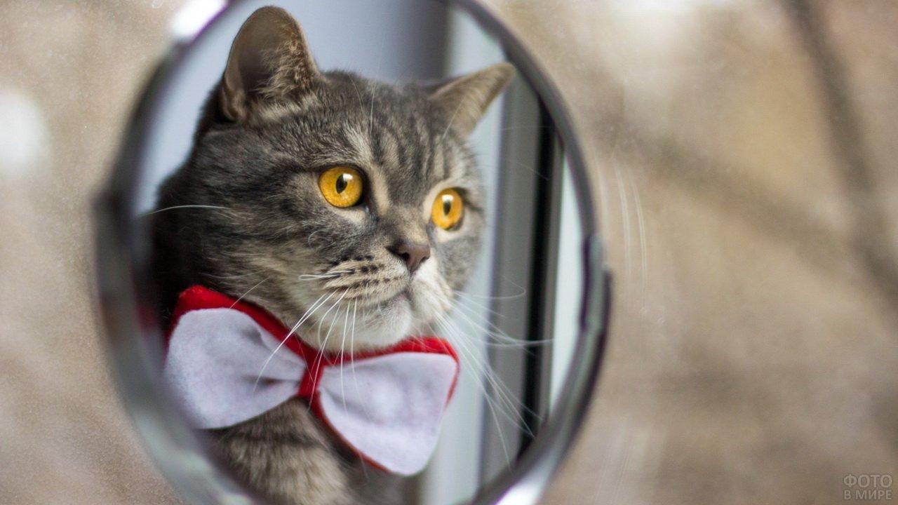 Кот с бабочкой в зеркале