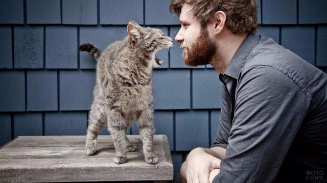 Кот шипит на хозяина