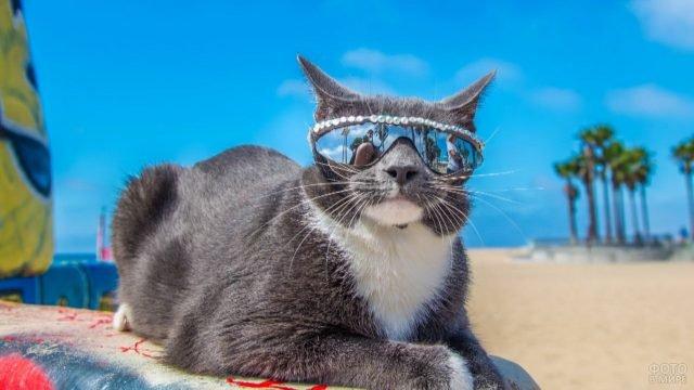 Кот в очках на пляже