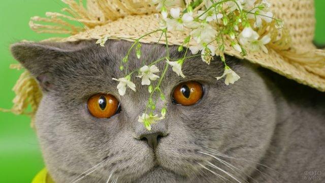 Кот в шляпе с цветочками