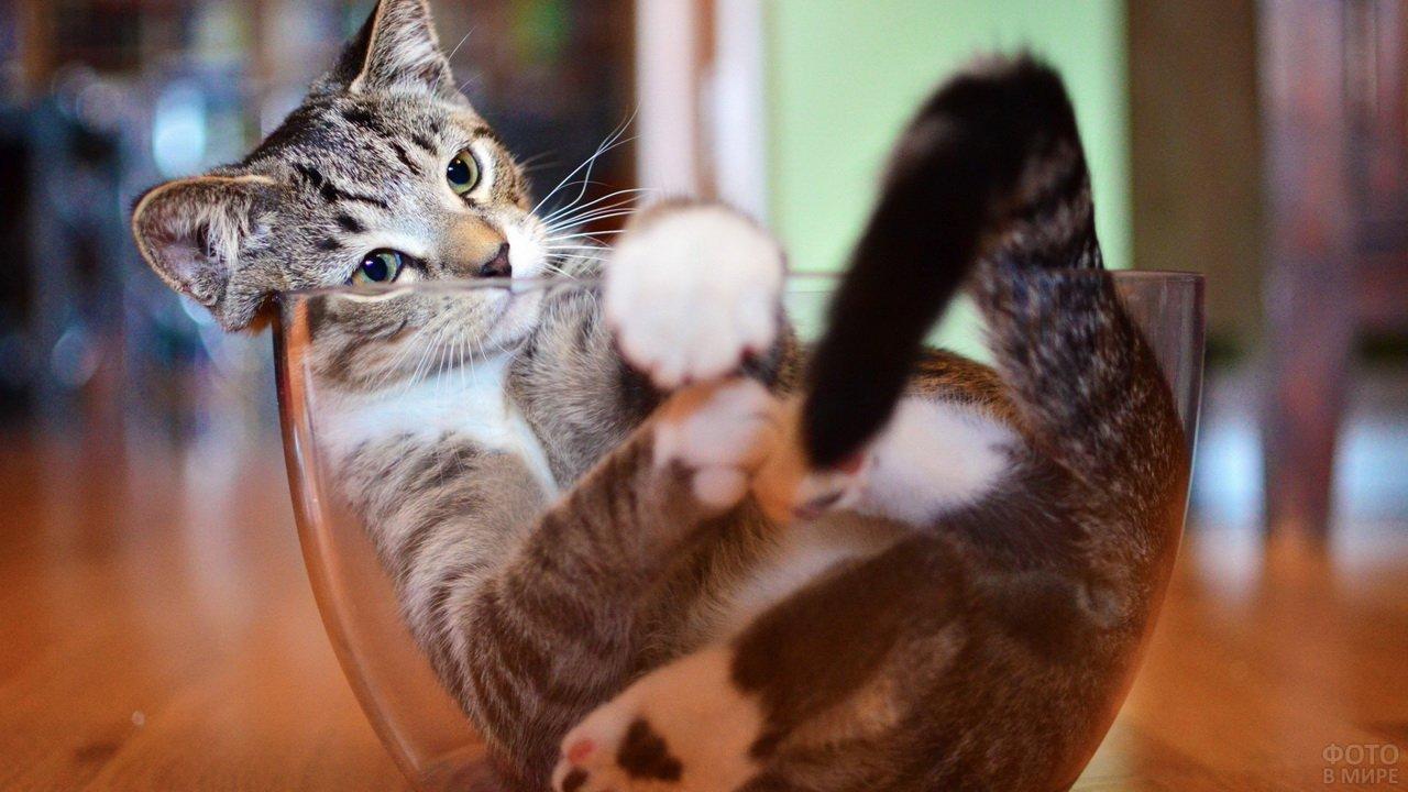 Котик разлёгся в стеклянной посудине