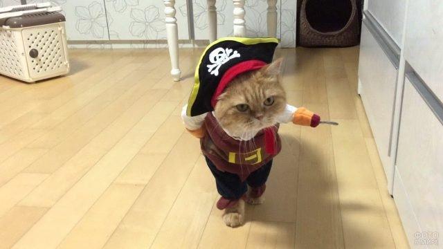 Котик в костюме пирата