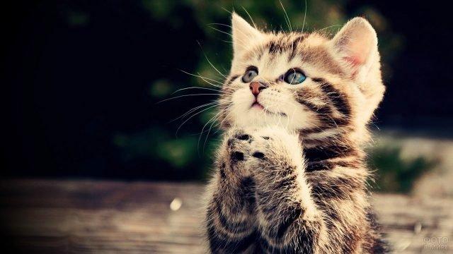 Котёнок в молебной позе