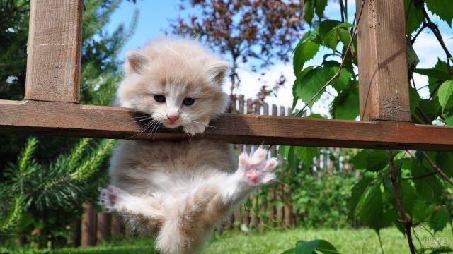 Котёнок завис на заборе