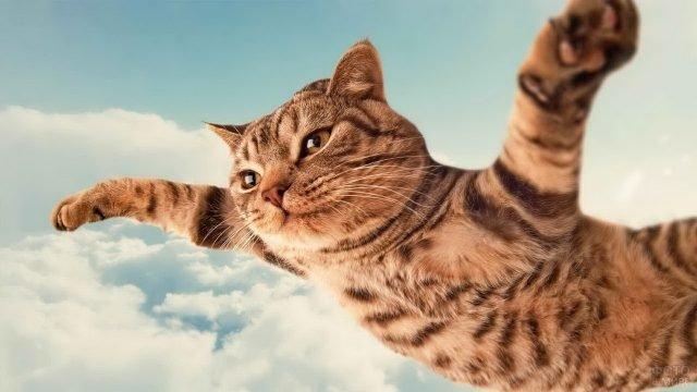 Летящий кот расставил лапы