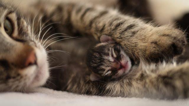 Мама кошка сильно обнимает котёнка
