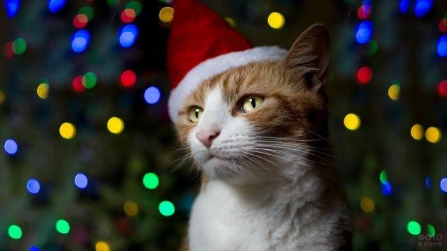 Не очень довольный кот в новогоднем наряде