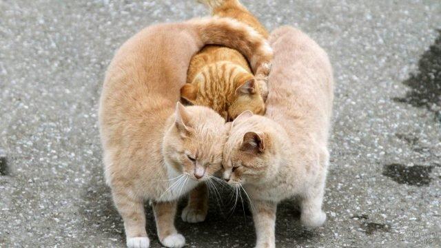 Обнимающиеся коты