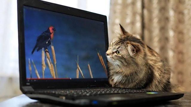Очень интересное кошачье кино