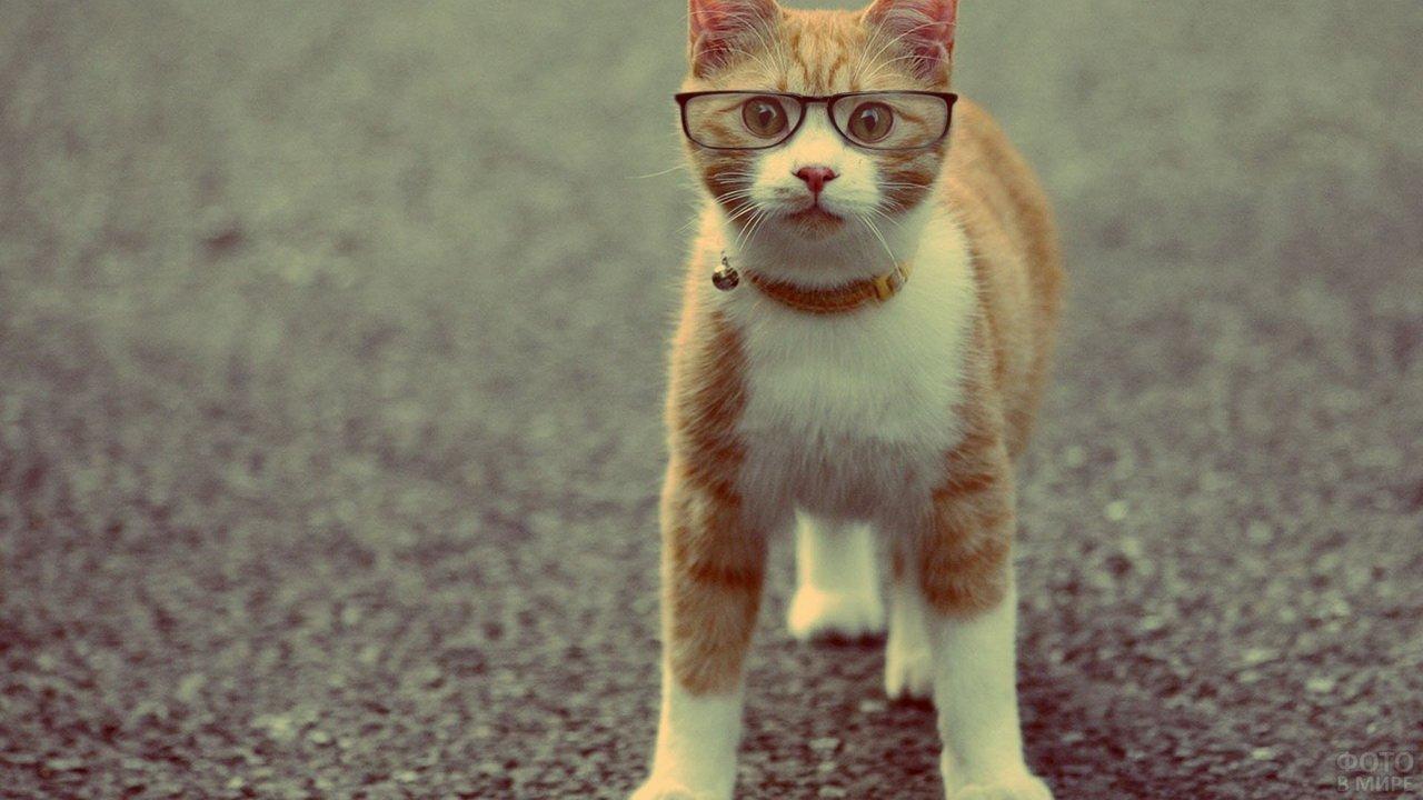 Прикольный кот-очкарик