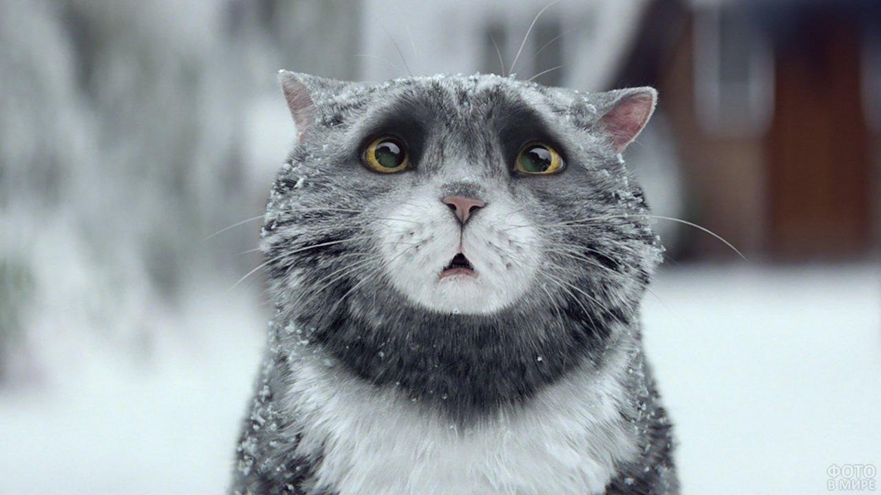 Прикольный взгляд серого кота
