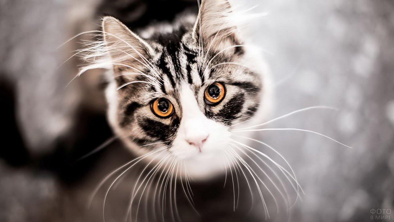 Просящий взгляд кота