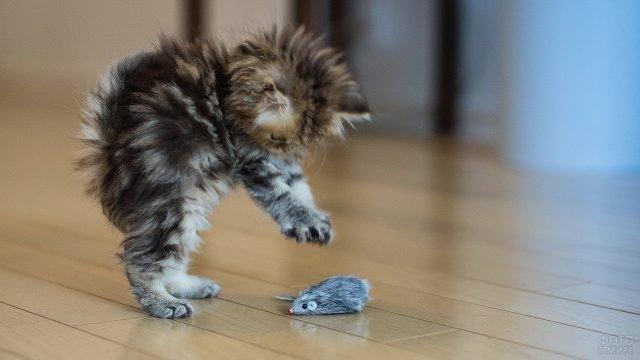 Пушистый котёнок атакует мышку