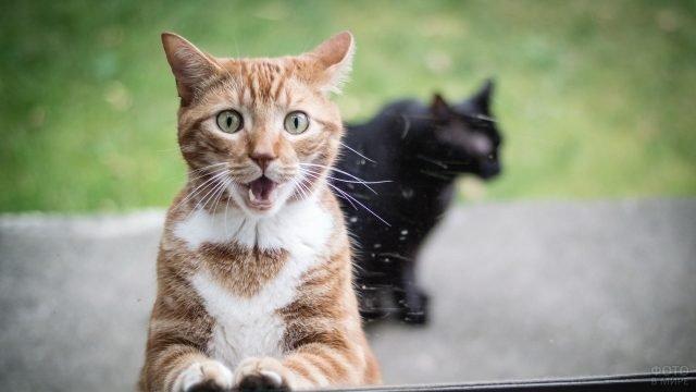 Рыжий кот с испуганным взглядом ломится в окно